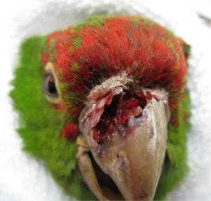 Beak attack