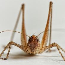 bush-cricket-1594641_640