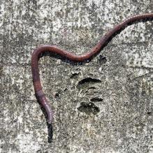 earth-worm-2562572_640