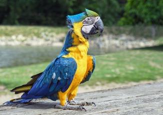 parrot-2875363_640