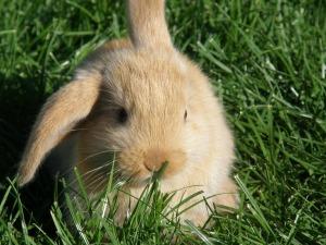 rabbit-2531800_1280