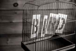 black and white bird birdcage cage
