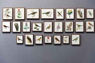 bird painting wall